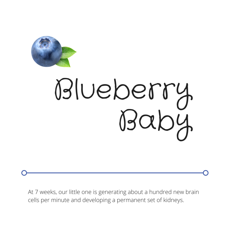 Blueberry Baby.png