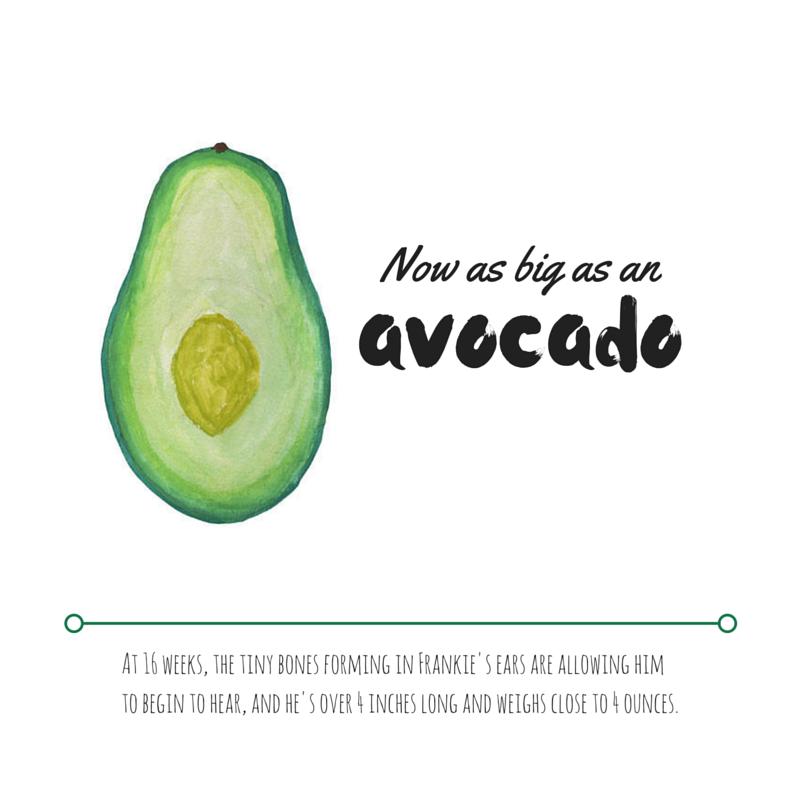 16 Weeks - Avocado.png